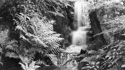 Introduction to Black & White Film Photography