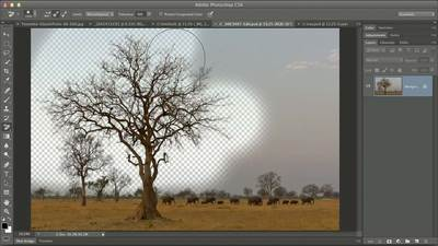 Adobe® Photoshop® Mastery: Advanced Masking