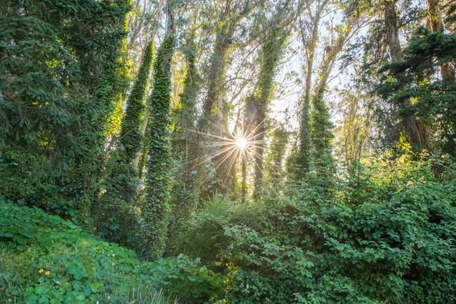 Sunstars: Creative Photography Challenge Ep. 10